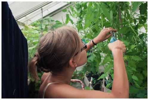 Explorers --of the garden variety door Bruno Bollaert