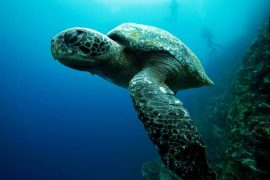 Protect Sea Turtles FI e1461659627629 Top 10 Destinations to Volunteer 2016