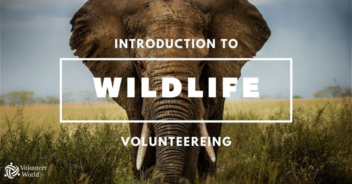 Copy of Copy of Copy of Copy of Copy of Copy of Copy of 5 Volunteer Volunteer in Wildlife Conservation | The Ultimate Guide