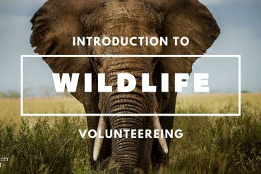 Copy of Copy of Copy of Copy of Copy of Copy of Copy of 5 Volunteer Volunteer in Wildlife Conservation | The Ultimate Guide