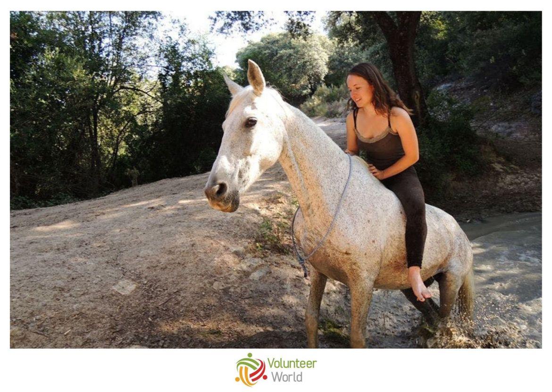 Horse Sanctuary min Best Volunteer Opportunities in Europe for Teenagers
