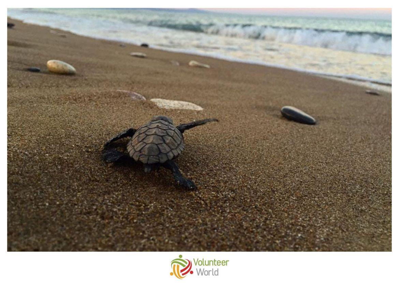 Sea Turtle Conservation Europe