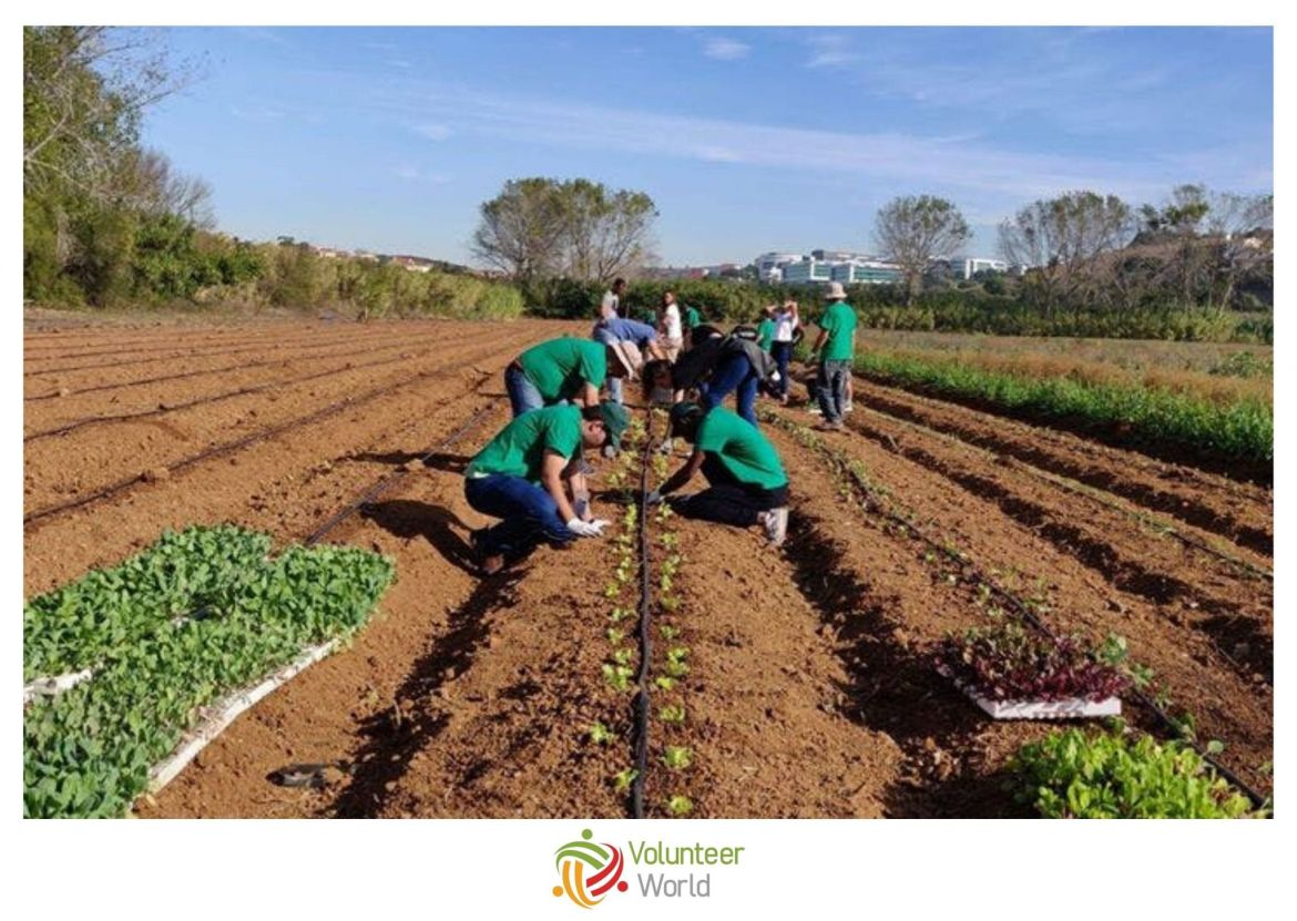 Sustainable Agriculture Europe