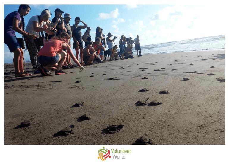Volunteers releasing Sea Turtles