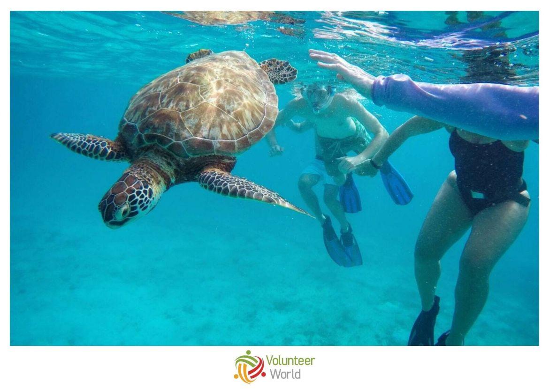 Volunteer with Sea Turtles in Belize