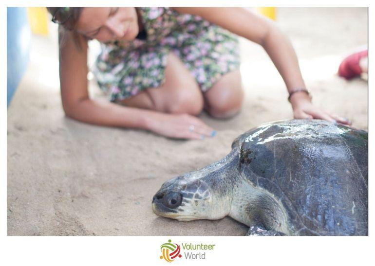 Volunteer Sea Turtles Ecuador