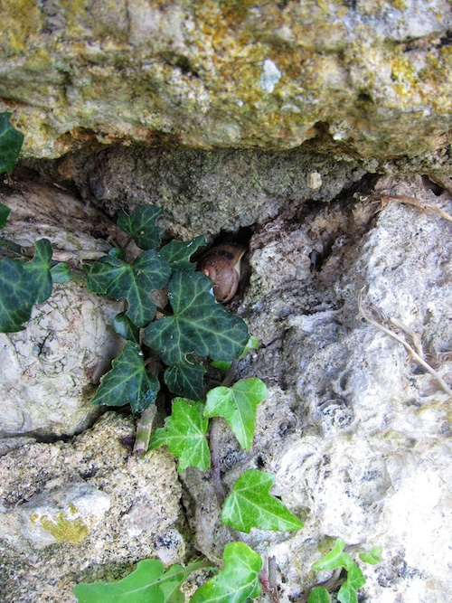 A snail in hiding.