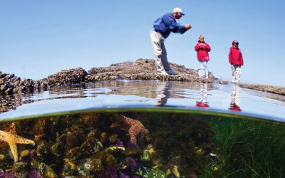 Tide Pool Tips