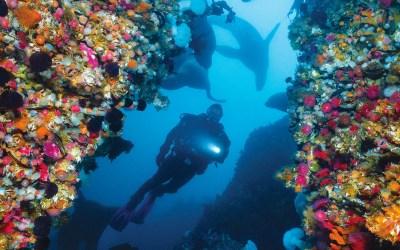 Washington's Best Dives