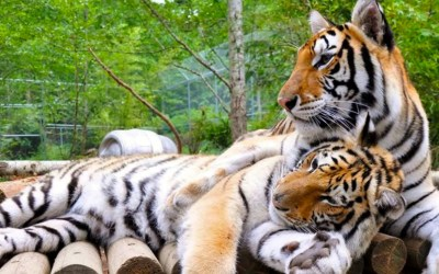 Washington Animal Sanctuaries