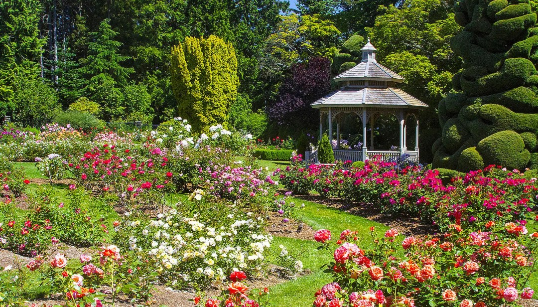 Roses at Woodland Park