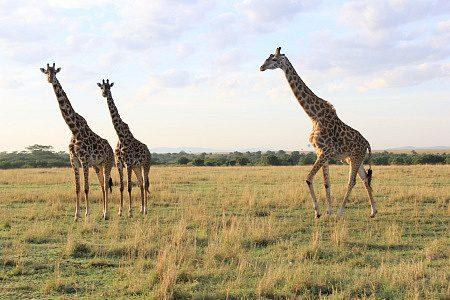 Things to do in Masai Marai