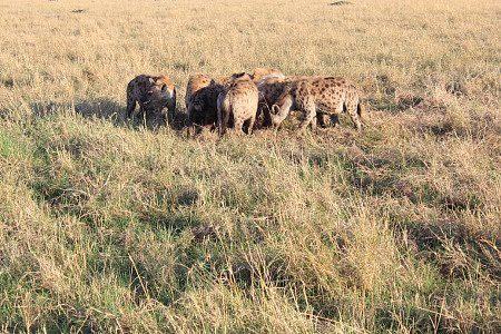 Things to do in Masai Mara