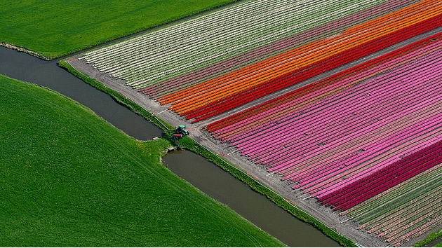 tulips_07.jpg