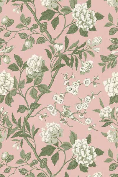 Blush background and white blossom from GP & J Baker