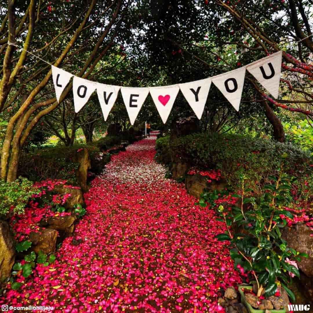 Camellia-hill-jeju-spring