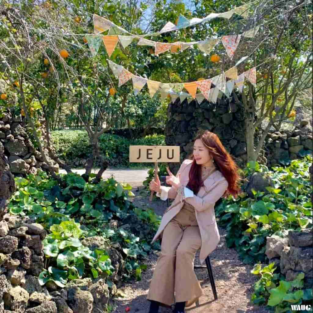 Jeju Island Tour - Camellia Hill