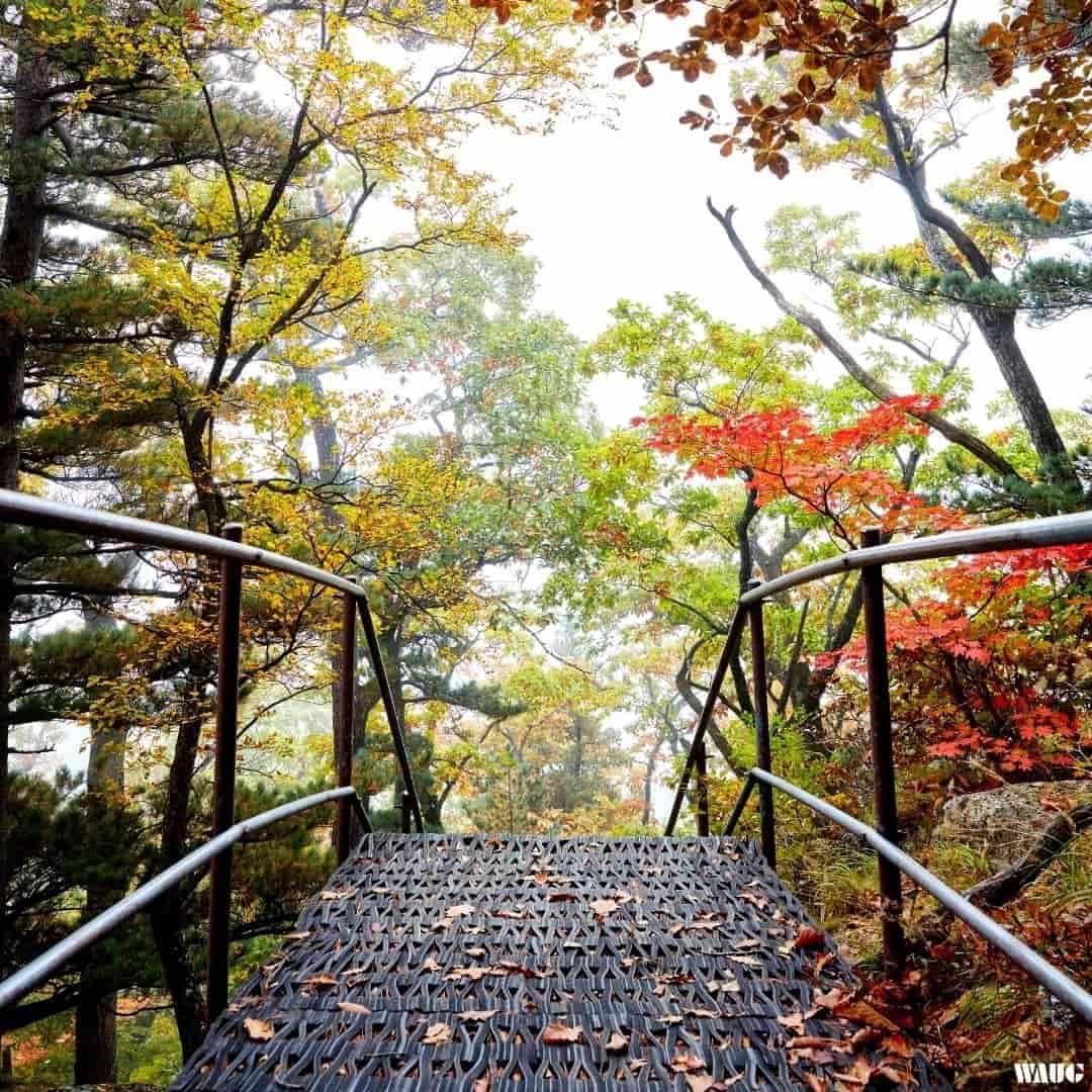 autumn-foliage-seoraksan