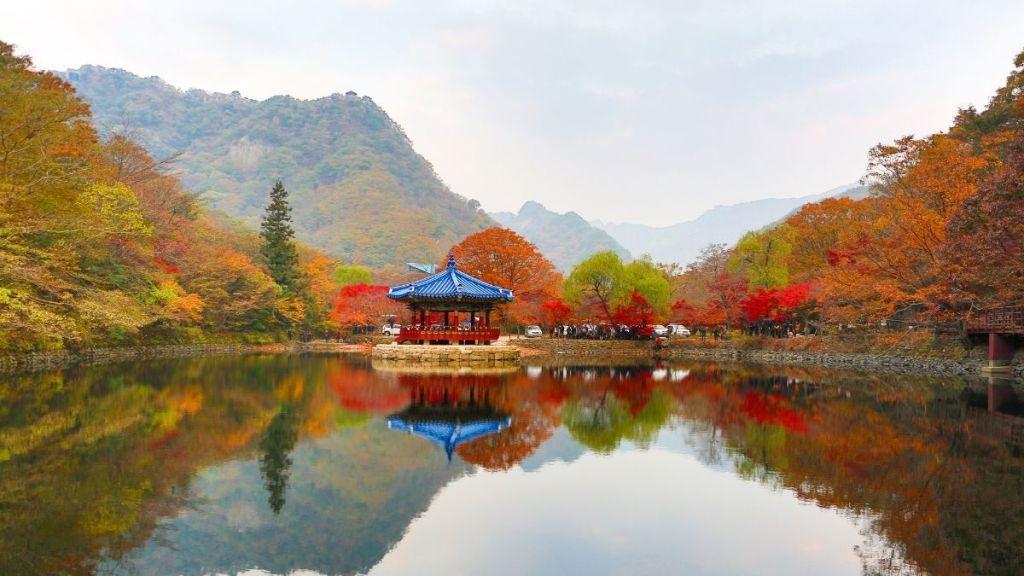 fall-foliage-korea-2020