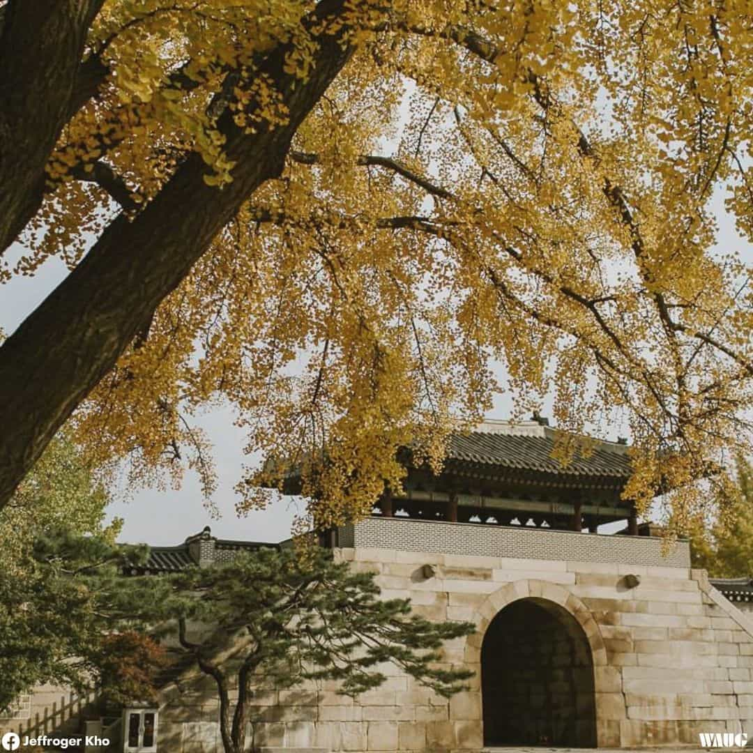 gyeongbokgung-palace-autumn-fall-3