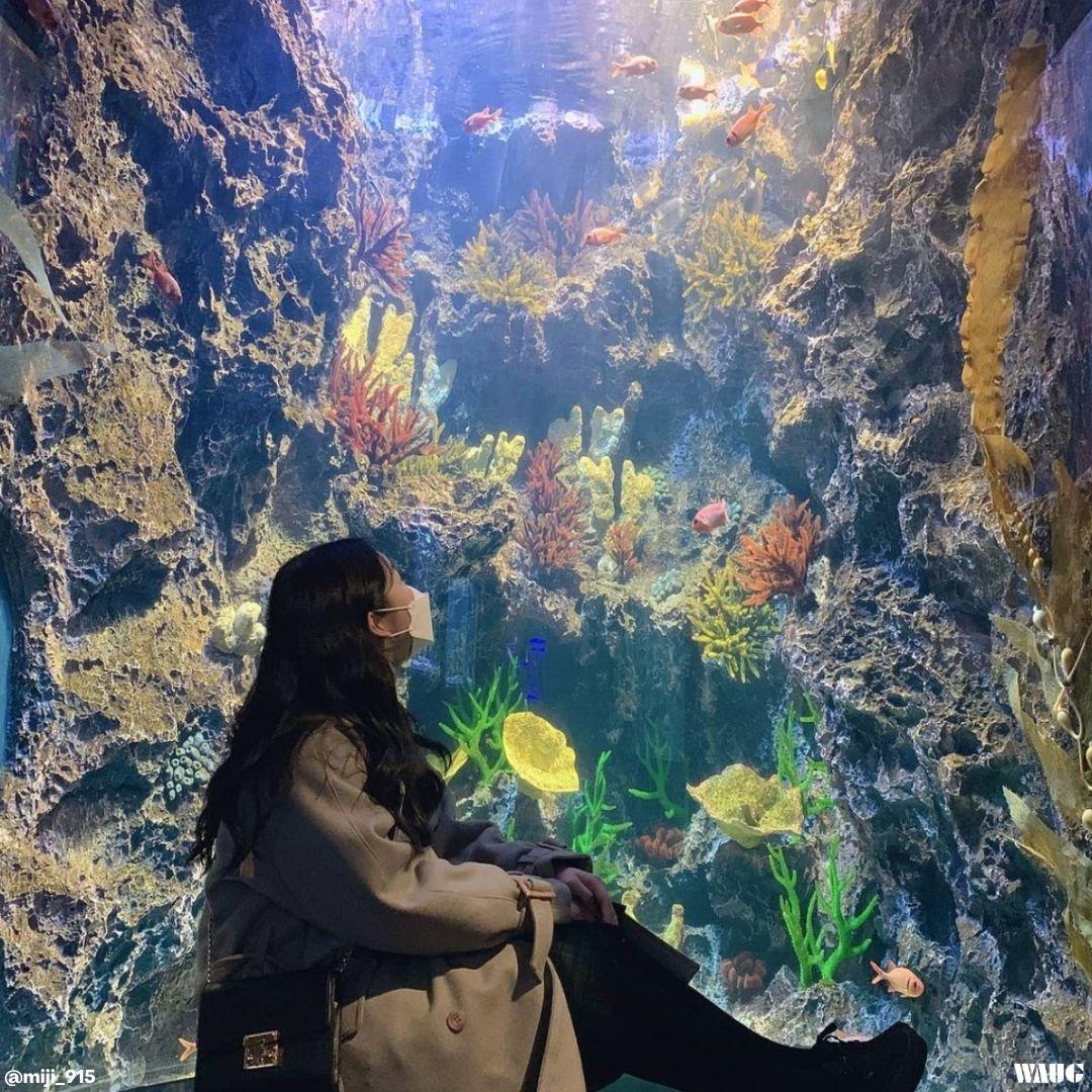 Aqua planet gwanggyo hours