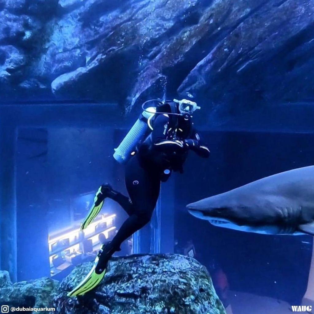 Dubai aquarium promo code
