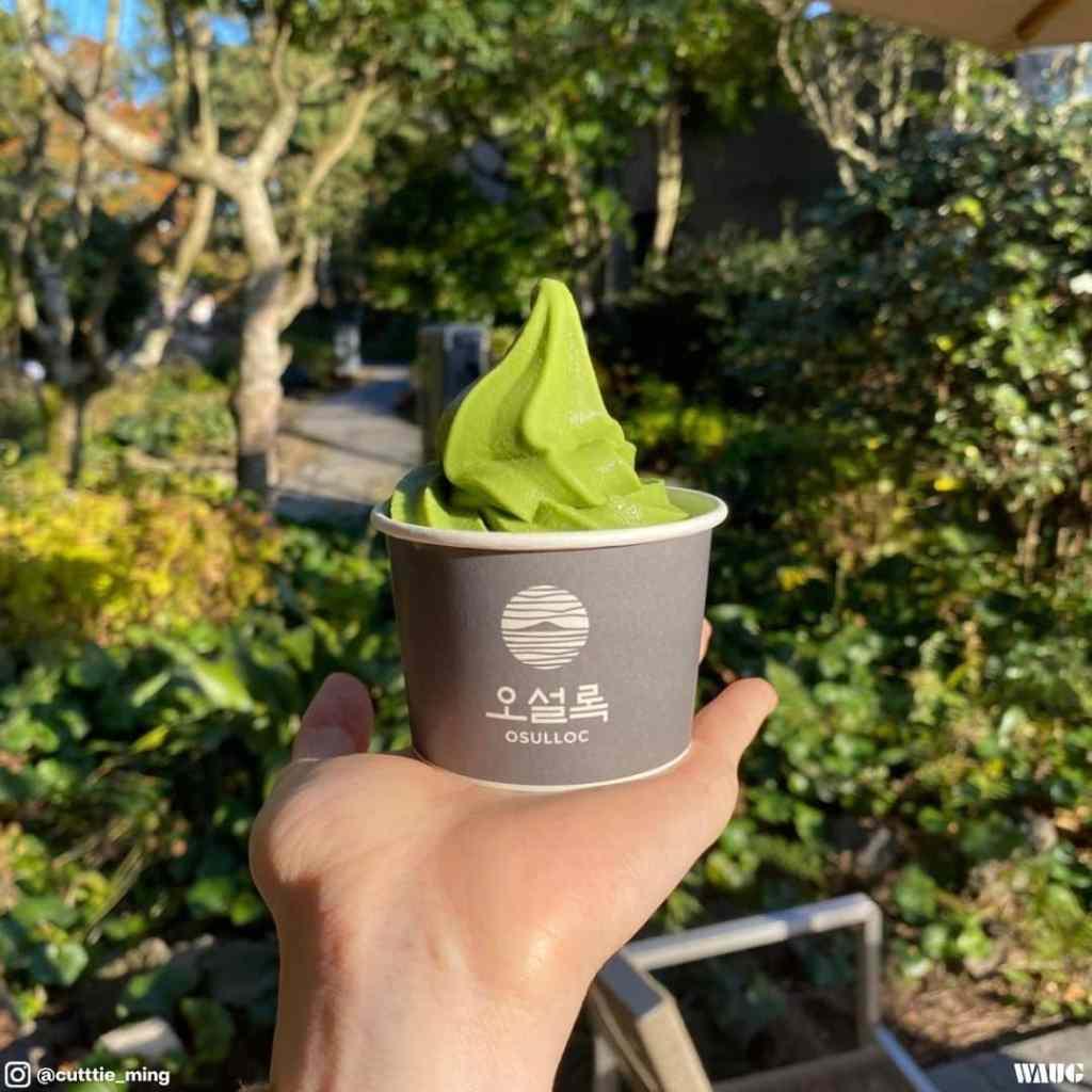Osulloc green tea field jeju