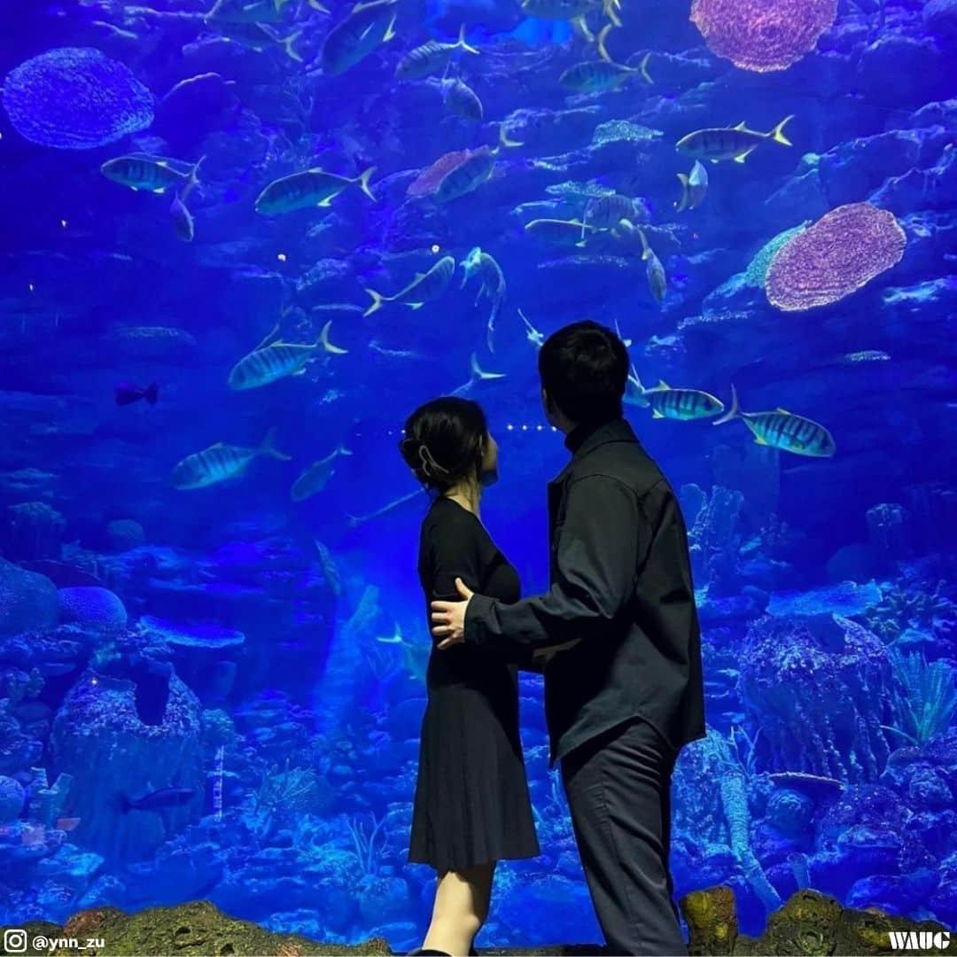 Sea life Busan aquarium review