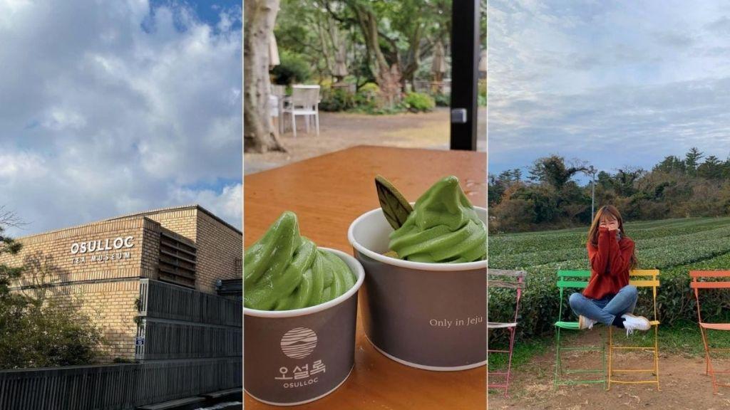 jeju-osulloc-tea-museum