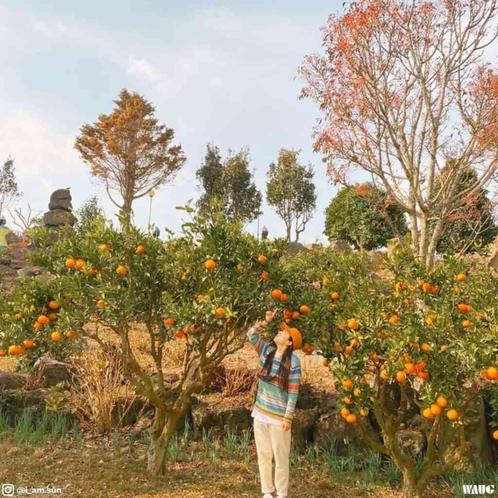 jeju-herb-garden-ticket-price