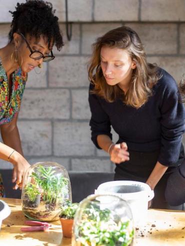 Comment entretenir un terrarium ?