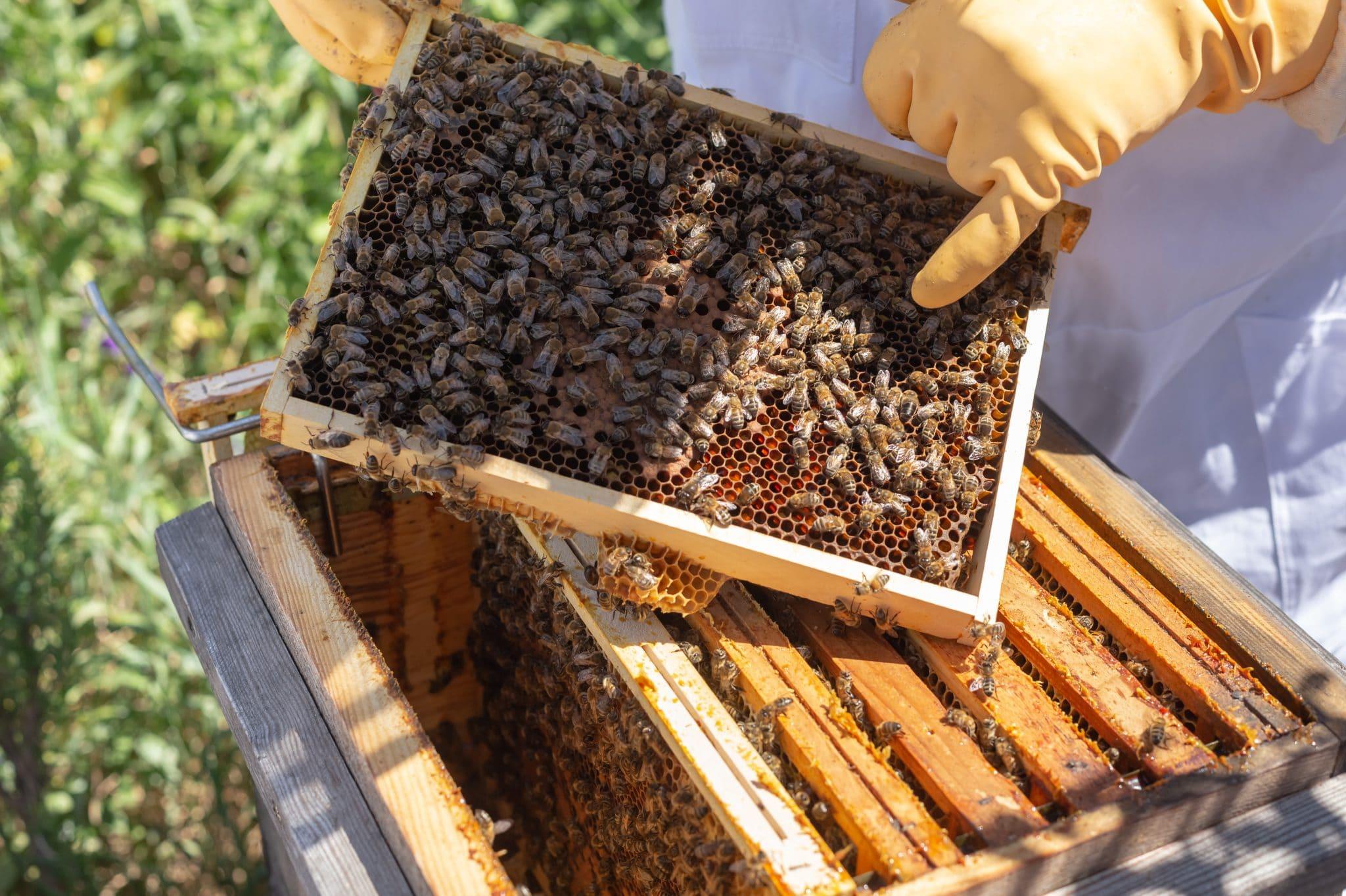 La disparition des abeilles, comment lutter ?