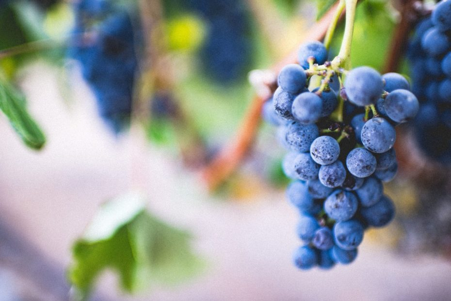 Are Grapes Good For Weight Loss