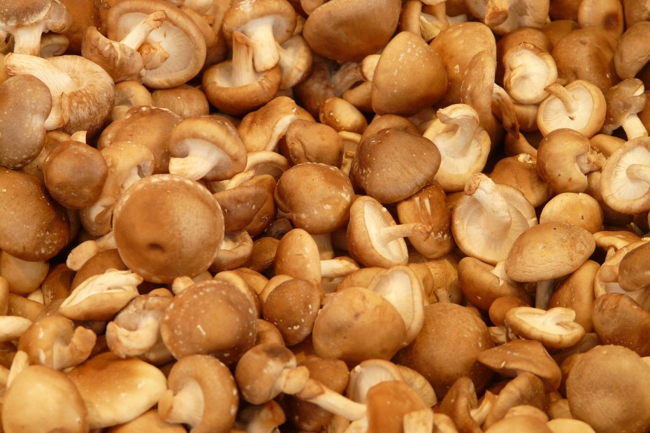 Are Shiitake Mushrooms Good For Weight Loss