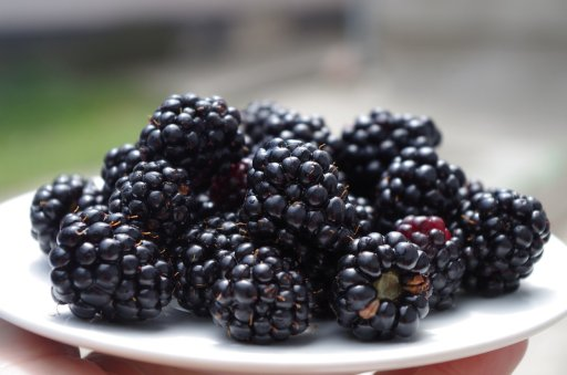 blackberries on a plate for weight loss