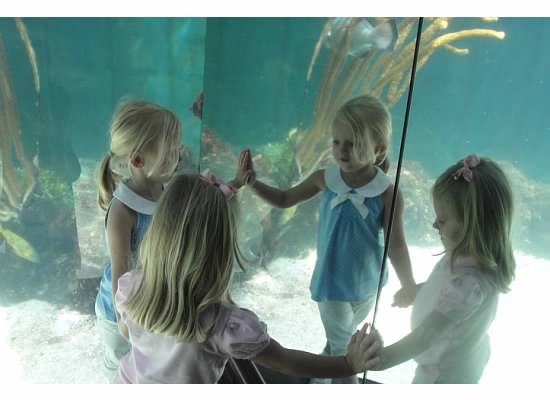 My kids at the Bermuda Aquarium in early 2010