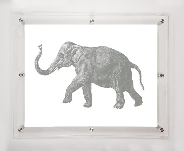 acrylic-framed-elephant-wall-art-print-2