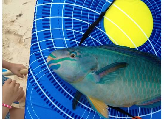 A parrot fish washed up on the beach to the delight of our kids!