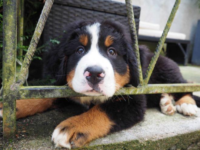 chien et petit garcon-4230751