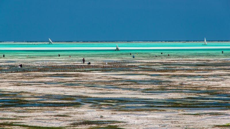 Viaggi a Zanzibar le 10 spiagge da non perdere  WePlaya