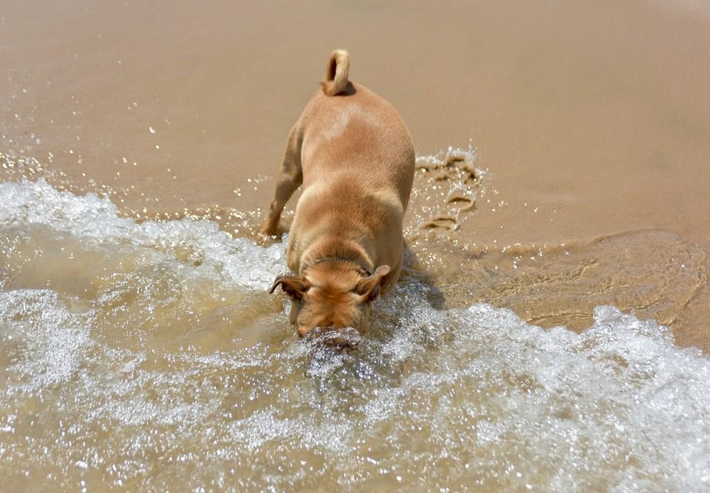 Spiagge Per Cani In Toscana  WePlaya
