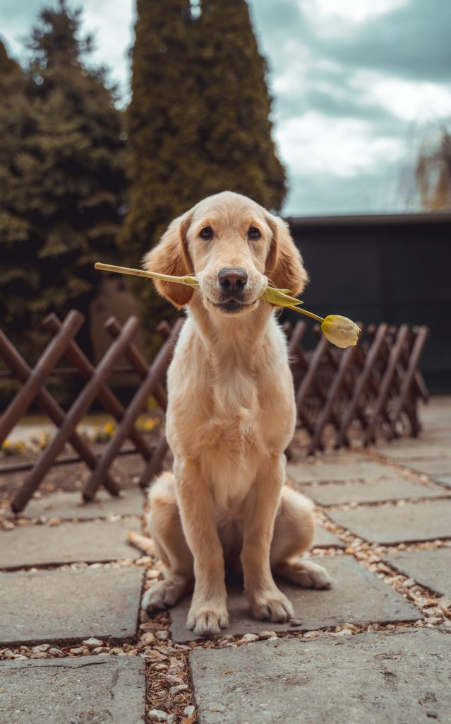 Happy Animal Picture : happy, animal, picture, Happy, Animal, Stories, Smile