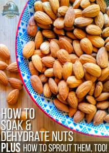 How To Soak & Dehydrate Nuts (plus how to sprout nuts, too!)