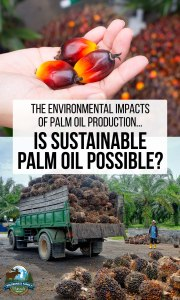 The Environmental Impacts Of Palm Oil Production… Is Sustainable Palm Oil Possible?