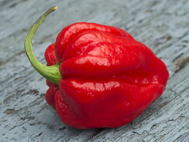 Red Savina Habanero