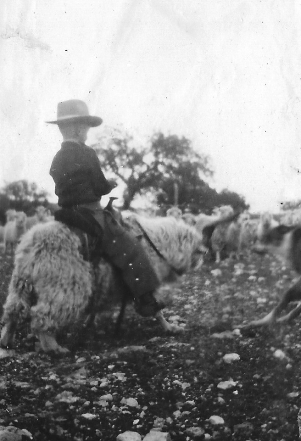 Wilkinson, FL riding angora goat in pasture from back est age 8 1923
