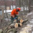 Das Holz wird gesägt