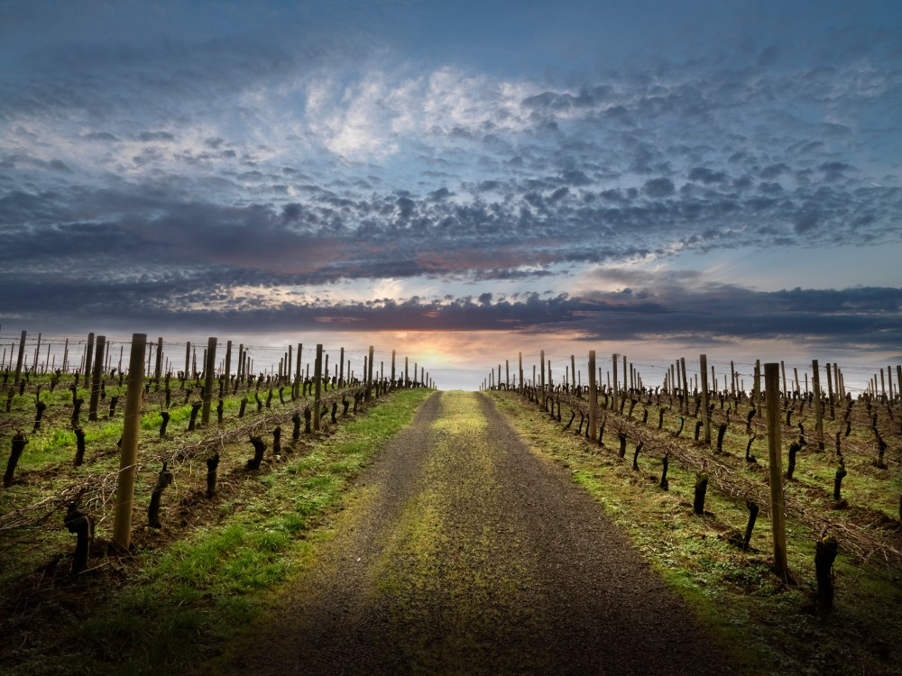 Willamette Valley Wineries are Open