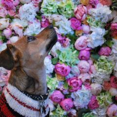 Baja Ringan Terbaik Kaskus Ugly Sweater Dog Party