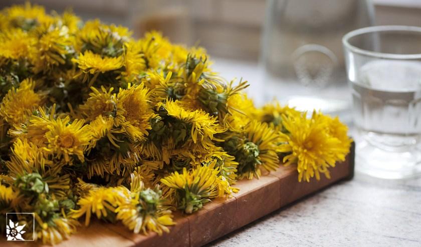 Löwenzahnblüten für den Honig